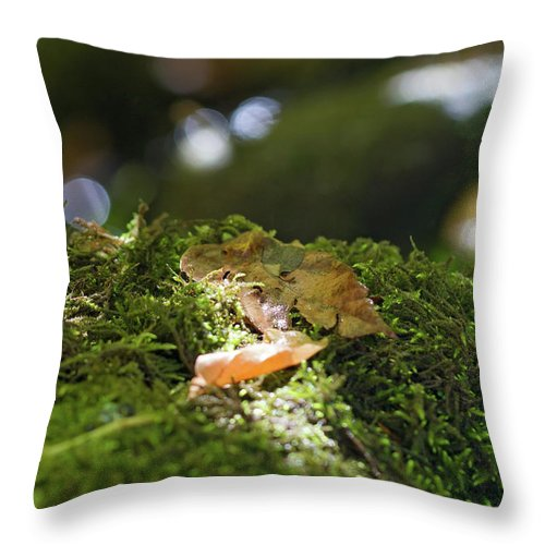 Spotlight Throw Pillow for Sale by Becca Buecher