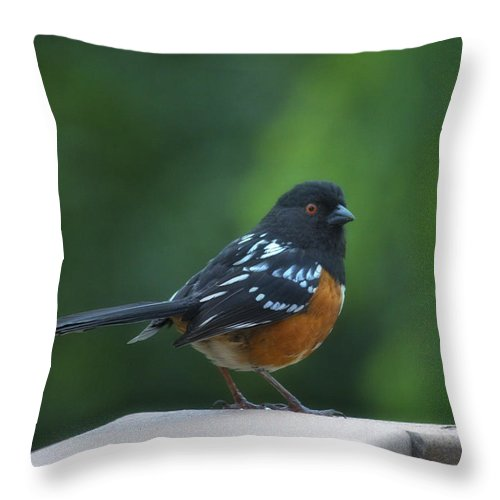 Bird Throw Pillow featuring the photograph Spotted Towhee by Linda Dunn