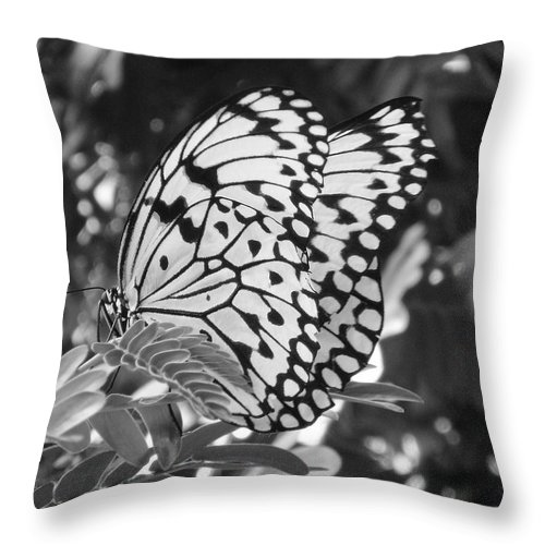 Photography Throw Pillow featuring the photograph Spread You Wings And Fly by Shelley Jones