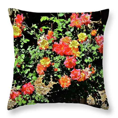 Flowers Throw Pillow featuring the photograph Spreading Cheer by Diana Hatcher