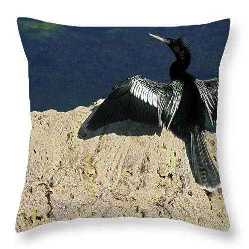 Anhinga Throw Pillow featuring the photograph Spreading My Wings by Sally Weigand