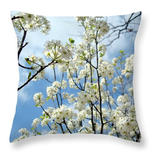 Trees Throw Pillow featuring the photograph Spring Awakening by Kathy Bucari