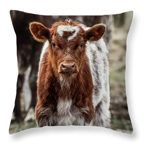 Cinematic Throw Pillow featuring the photograph Spring Baby by Brad Allen Fine Art
