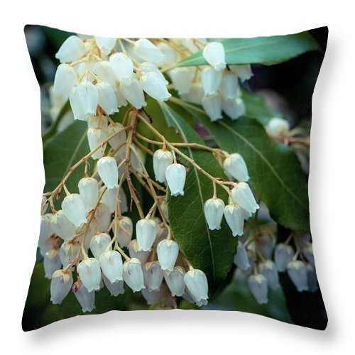 Spring Throw Pillow featuring the photograph Spring Bloom by Lilia D