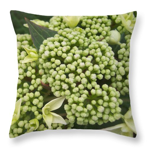Green White Flower Garden Leaves Throw Pillow featuring the photograph Spring Blooms 2 by Anna Villarreal Garbis
