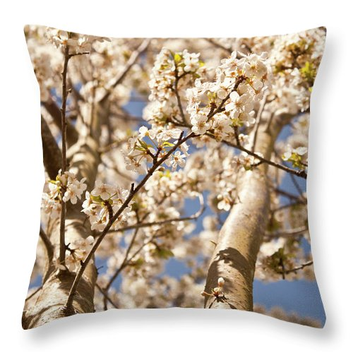 Flowers Throw Pillow featuring the photograph Spring Blooms by Danielle Silveira