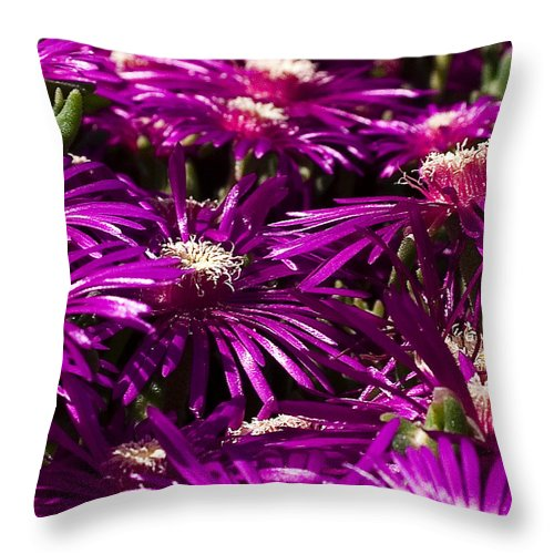 Floral Throw Pillow featuring the photograph Spring Blooms by David Patterson