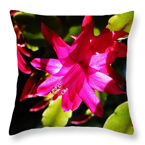 Cactaceae Throw Pillow featuring the photograph Spring Blossom 15 by Xueling Zou