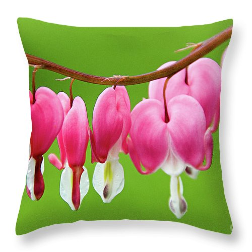 Bleeding Hearts Throw Pillow featuring the photograph Spring Blossoms by Jacqueline Milner
