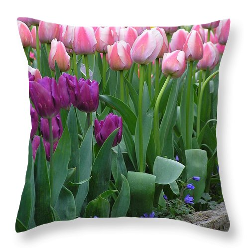 Tulips Throw Pillow featuring the photograph Spring Colors by Louise Magno