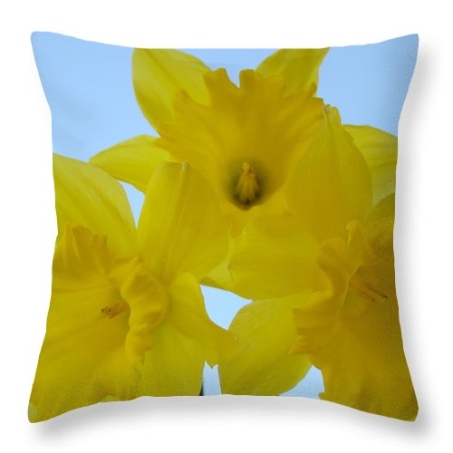 �daffodils Artwork� Throw Pillow featuring the photograph Spring Daffodils 2 Flowers Art Prints Gifts Blue Sky by Baslee Troutman