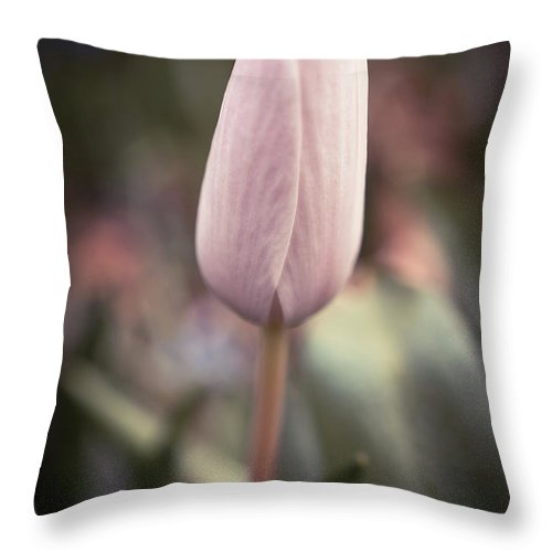 Spring Flowers Throw Pillow featuring the photograph Spring Flower 6 by Lilia D