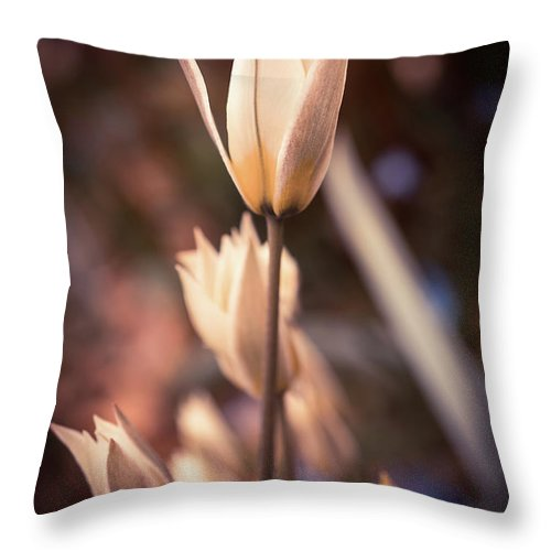 Spring Flowers Throw Pillow featuring the photograph Spring Flowers 2 by Lilia D