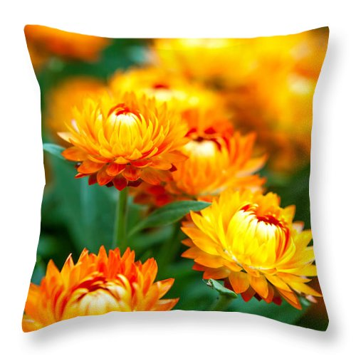 Spring Flowers Throw Pillow featuring the photograph Spring Flowers In The Afternoon by Az Jackson