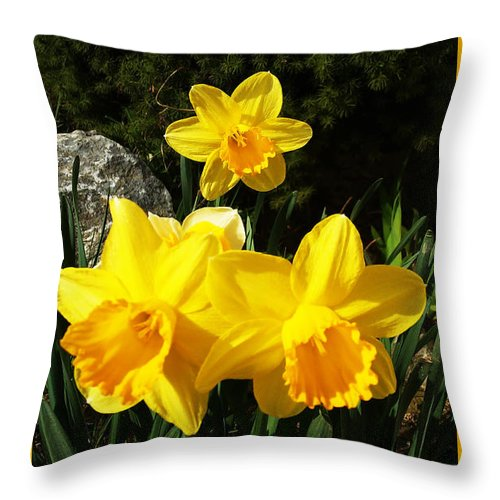 Daffodils Throw Pillow featuring the photograph Spring Gold by Jasna Dragun