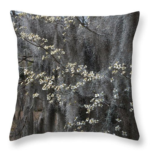 Photograph Throw Pillow featuring the photograph Spring Mystery by Suzanne Gaff