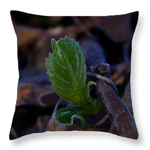 Geen Throw Pillow featuring the photograph Spring Peeps Forth by Douglas Barnett