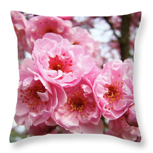 Blossom Throw Pillow featuring the photograph Spring Pink Tree Blossoms Art Prints Baslee Troutman by Baslee Troutman