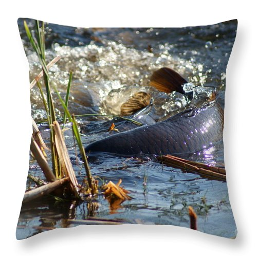 Carp Fish Spawning Throw Pillow featuring the photograph Spring Spawn by Joanne Smoley