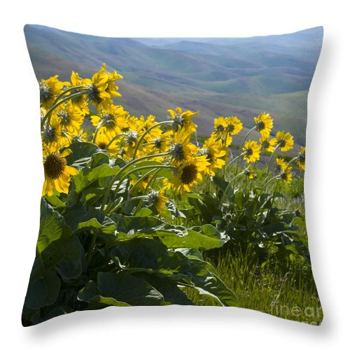 Spring Throw Pillow featuring the photograph Spring Sunflowers by Idaho Scenic Images Linda Lantzy