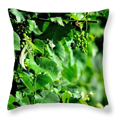 Spring Time Vineyards Throw Pillow featuring the photograph Spring Time Vineyards by Charles J Pfohl