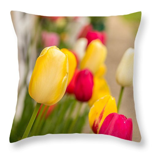 Flowers Throw Pillow featuring the photograph Spring Tulips by Beverly Tabet