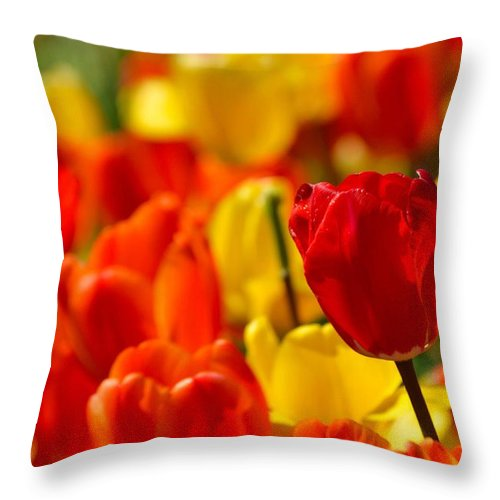 Spring Throw Pillow featuring the photograph Spring Tulips by Deb Lanford