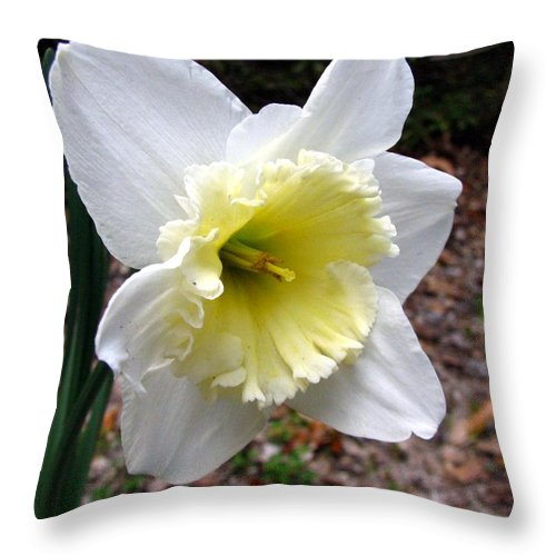 Daffodil Throw Pillow featuring the photograph Spring's First Daffodil 1 by J M Farris Photography