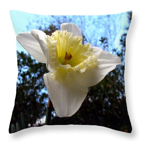 Daffodil Throw Pillow featuring the photograph Spring's First Daffodil 2 by J M Farris Photography