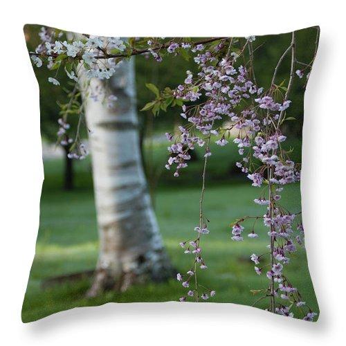 Birch Throw Pillow featuring the photograph Springtime Birch by Faith Harron Boudreau