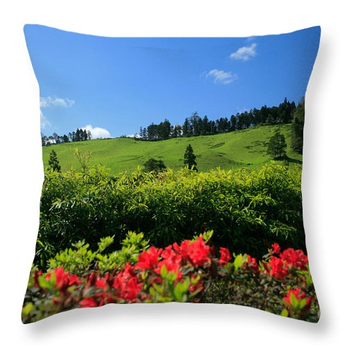 Countryside Throw Pillow featuring the photograph Springtime Landscape by Gaspar Avila