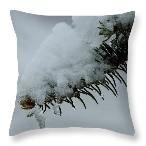 Spruce Throw Pillow featuring the photograph Spruce Needles And Ice by Betty-Anne McDonald