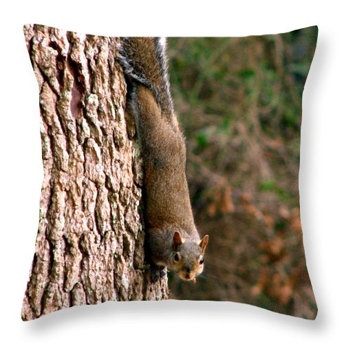 Squirrel Throw Pillow featuring the photograph Squirrel 6 by J M Farris Photography