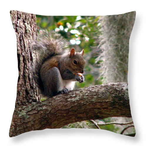 Squirrel Throw Pillow featuring the photograph Squirrel 7 by J M Farris Photography