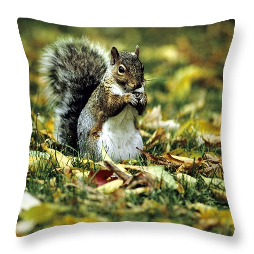 Squirrel Throw Pillow featuring the photograph Squirrel In Leaves by Steve Somerville