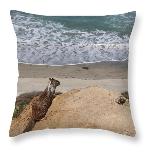 California Throw Pillow featuring the photograph Squirrel Soaking In The Ocean View  by Christy Pooschke