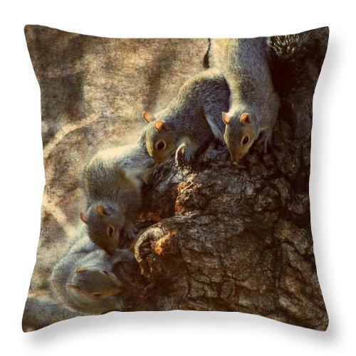 Squirrels Throw Pillow featuring the photograph Squirrels - A Family Affair Xi by Aurelio Zucco