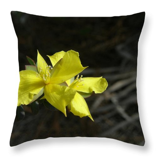Flower Throw Pillow featuring the photograph St. John by Kimberly Mohlenhoff