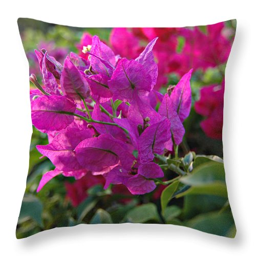 St Lucia Floral Throw Pillow featuring the photograph St Lucia Floral by J R Baldini