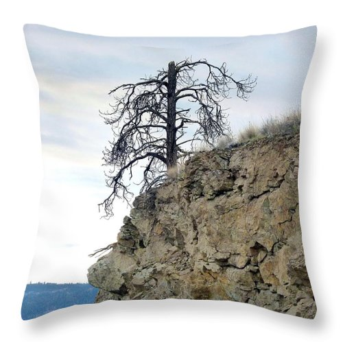Pine Tree Throw Pillow featuring the photograph Stalwart Pine Tree by Will Borden