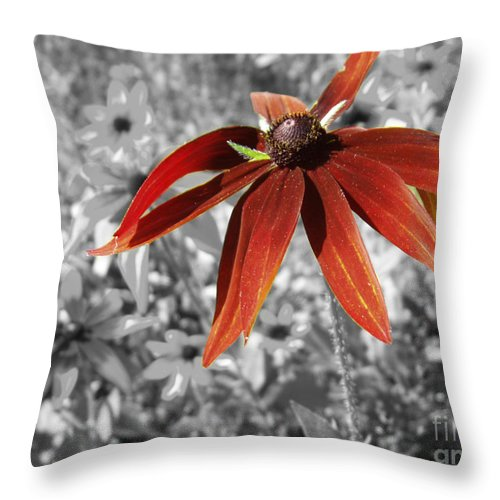 Black Eyed Susan Throw Pillow featuring the photograph Stand Out by Cathy Beharriell