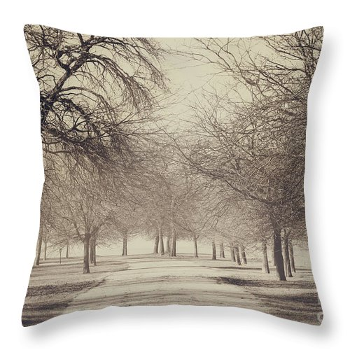 Trees Throw Pillow featuring the photograph Stand Where I Stood by Dana DiPasquale