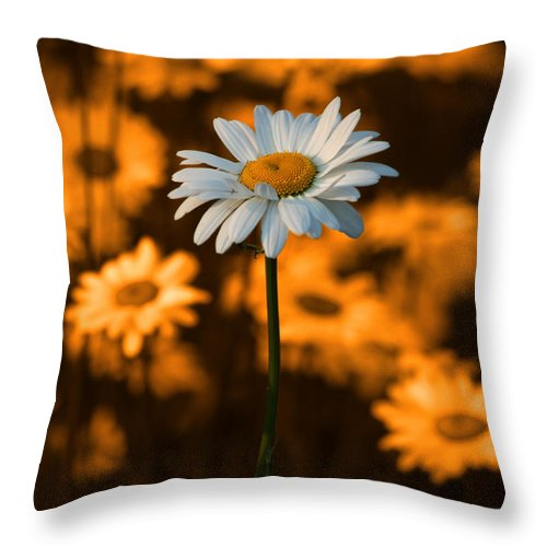 Daisy Throw Pillow featuring the photograph Standing Alone by Linda McRae