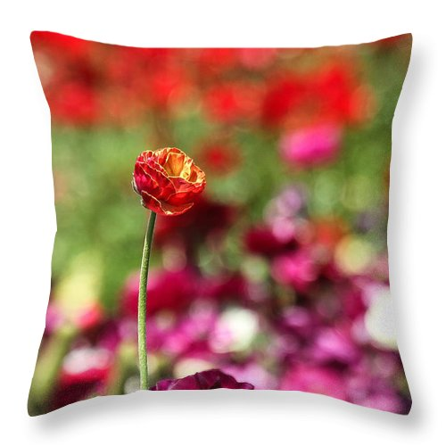 Single Flower In A Field Of Flowers Throw Pillow featuring the photograph Standing Out Above The Crowd by Mary Ourada