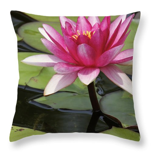 Waterlilly Throw Pillow featuring the photograph Standing Tall In The Pond by Deborah Benoit