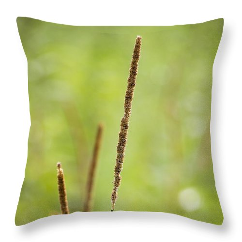 Nature Throw Pillow featuring the photograph Standing Tall by Sharon McConnell