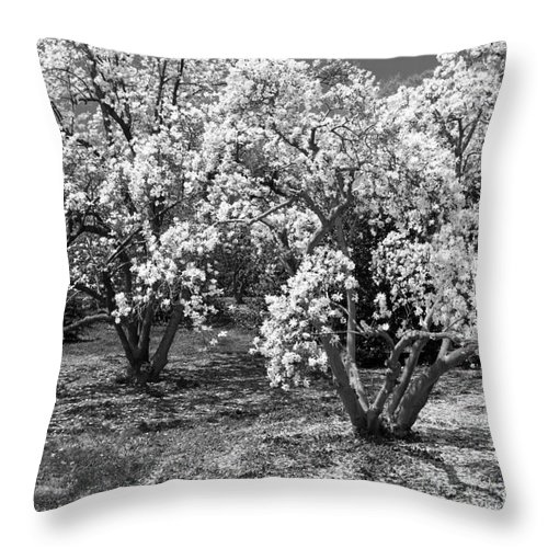 Dc Landcsapes Throw Pillow featuring the photograph Star Magnolia Trees by Chris Scroggins