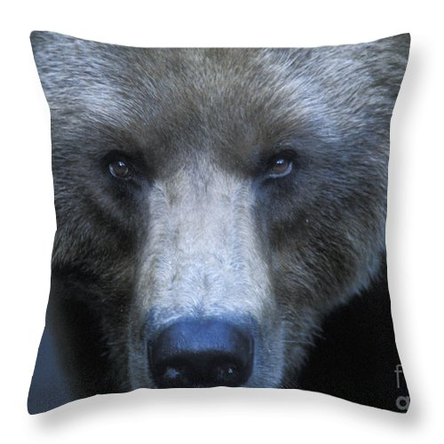 Yellowstone Throw Pillow featuring the photograph Stare Down by Sandra Bronstein