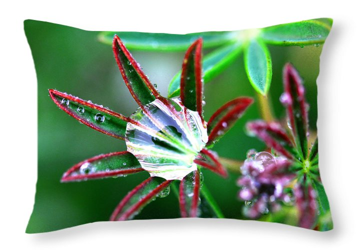 Rain Throw Pillow featuring the photograph Starry Droplets by Marie Jamieson