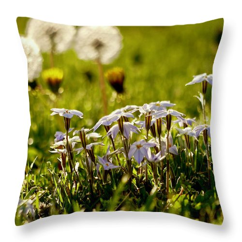 Star Flower Throw Pillow featuring the photograph Stars And Dandelions by Rachel Morrison